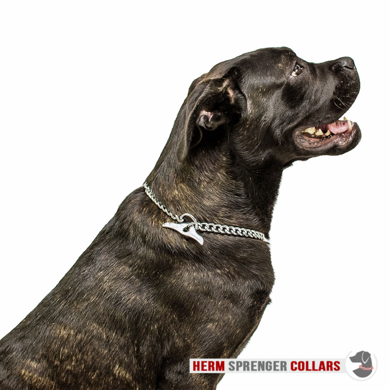 """Taming Force"" Chrome Plated Short Link Chain Collar with Flat Chain and Toggle - 3.0 mm"