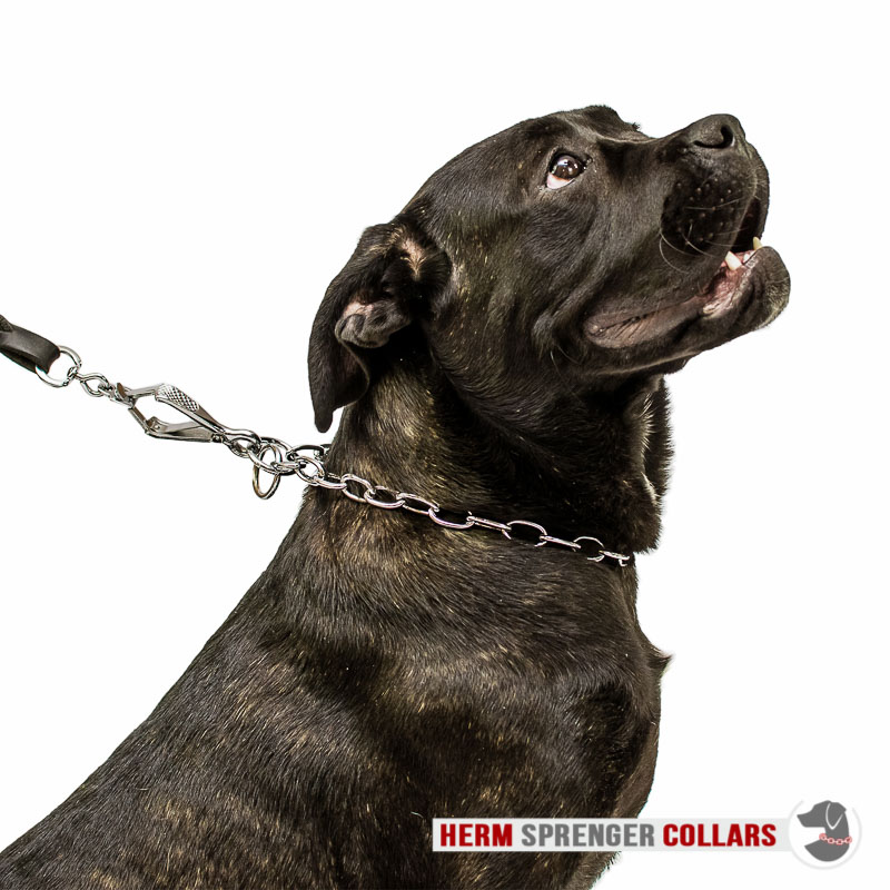 """Keeper of the Fur"" Chrome Plated Medium Sized Link Chain Collar with Fur Saving Links - 3.4 mm"